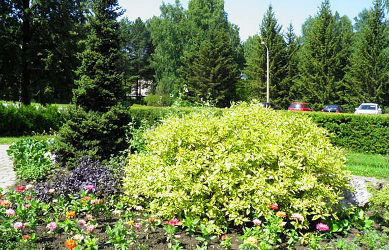 Ботанический сад в Советском районе