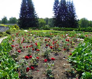 Центральный Ботанический сад в Новосибирске