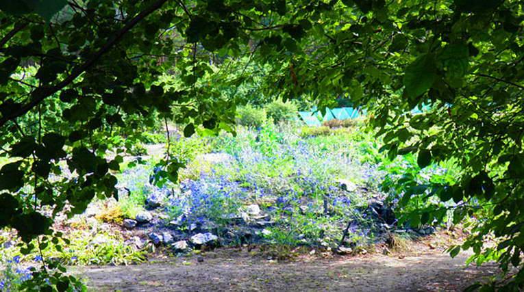 Главный ботанический сад Золотодолинская