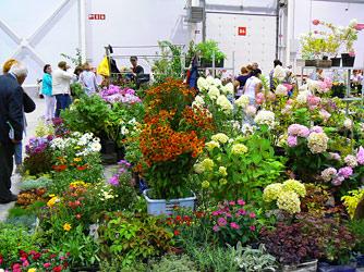 Цветы и сады Сибири