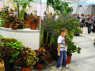 Выставка цветы сады сибири